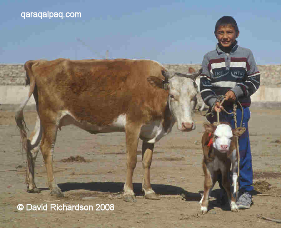 Young Qaraqalpaq boy with cow and calf